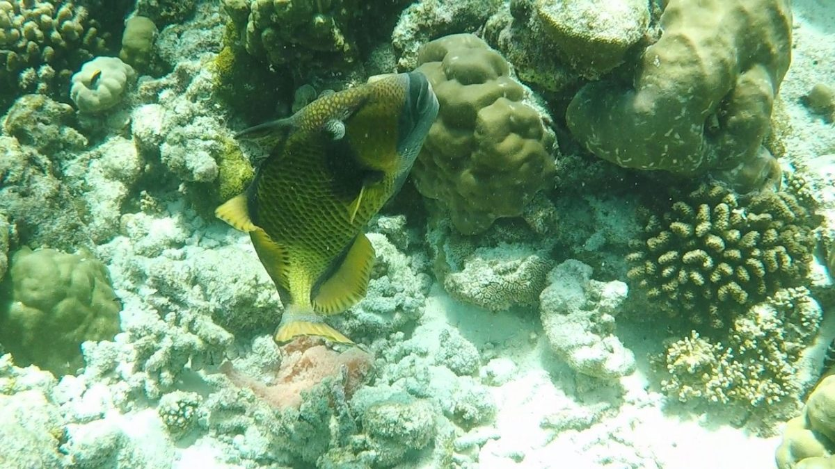 Maldives Snorkeling Accidents – Updated 2018